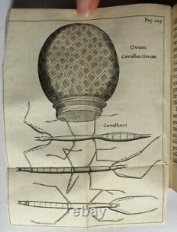 Antique 1671 EXPERIMENTA INSECTORUM Natural History REDI Science ENTOMOLOGY Rare