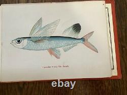 Rare Antique Vintage Honolulu Aquarium Hawaiian Fishes Hawaii Book James Steiner