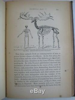 Rare Victorian Science Bible Geology Dinosaurs Evolution Fossils Primeval Man