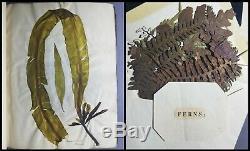 Superb Rare Huge Antique Mid-19thC British Seaweed Specimen Album & Herbarium